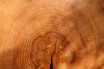 PBL: biomassa nodig, maar beste gebruik is niet eenduidig
