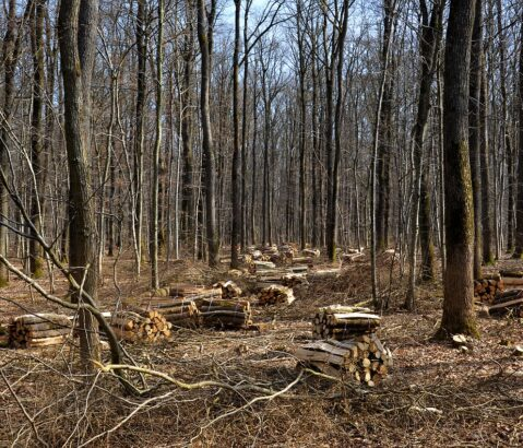 Met druk op biomassa groeit ook druk op klimaatdoelen